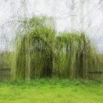 Sans titre, de la série « Undefined Landscapes » - Andrés Donadio